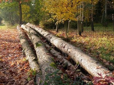 Troncs à terre dans l'Arboretum d'Amance en automne