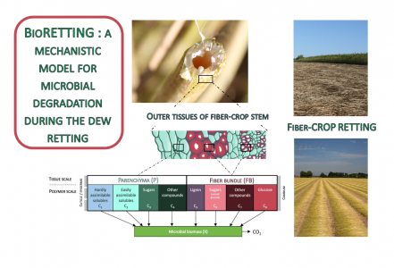 8 June 2020 - A model to simulate the biodegradation during dew retting