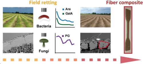 30 March 2020 - Tracking dew retting of flax and impact on the properties of fibers and composites