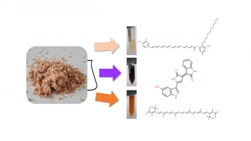 02 septembre 2021 - Utilisation de co-produits agricoles pour la bioproduction de pigments naturels