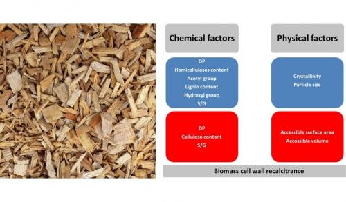03 février 2020 - Une revue sur l'état des connaissances de la récalcitrance de la biomasse