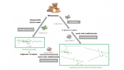 12 avril 2021 - Un nouveau procédé pour la production de bio-tensioactifs à partir de son de blé