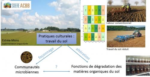12 juin 2018 - Travail du sol et aptitudes des microorganismes à dégrader les matières organiques