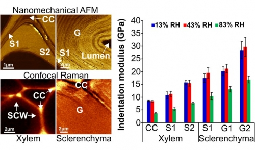 1er juin 2020 - L'humidité affecte les propriétés mécaniques des fibres de chanvre à l'échelle nano