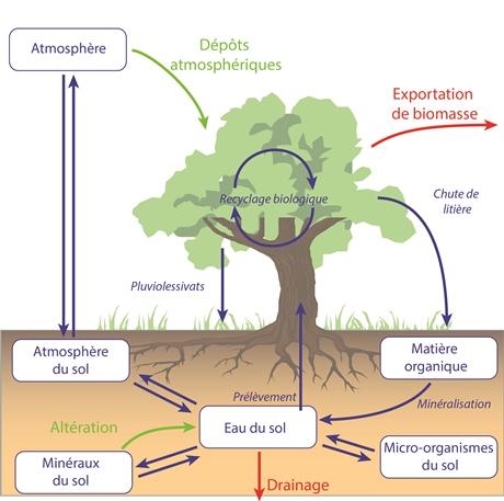 Schéma Cycles FR