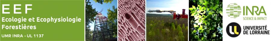 Bienvenue sur le site web de l'unité Ecologie et Ecophysiologie Forestières