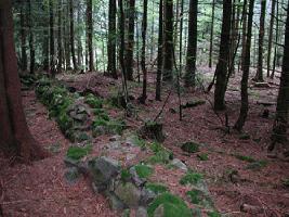 muret_forêt