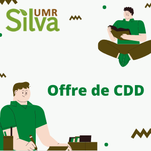 offre CDD