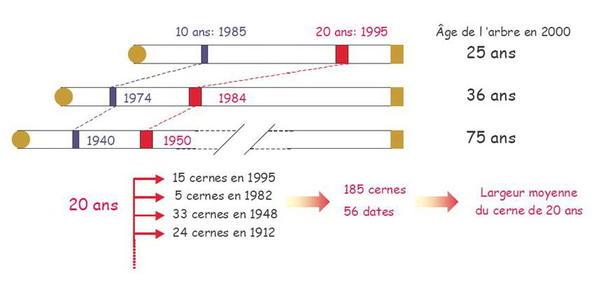calcul courbe âge référence