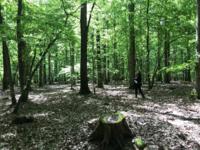 dispositif en peuplement pur de chêne de la Grande Bouzule