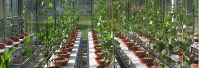 Robot de phénotypage pouvant accueillir 72 plants et permettant de contrôler l'irrigation.