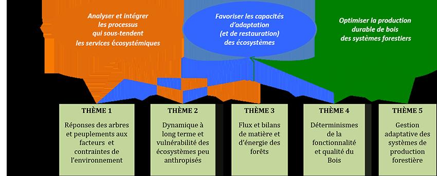 projet scientifique UMR Silva