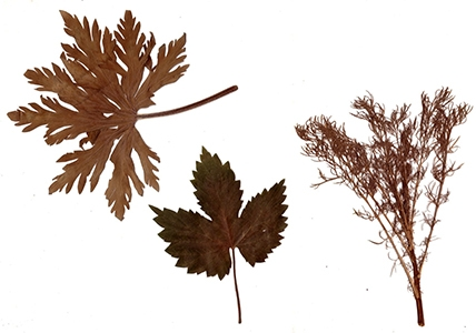 image herbier