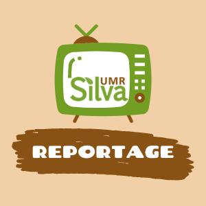 image reportage